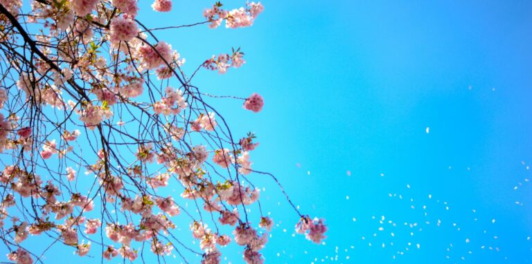 spring2021